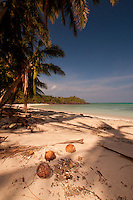 Coconuts at Devil's Beach, Turtle Island, Yasawa Islands, Fiji