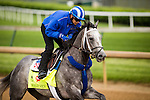 LOUISVILLE, KY - MAY 04: Mohaymen gallops in preparation for the Kentucky Derby at Churchill Downs on May 04, 2016 in Louisville, Kentucky.(Photo by Alex Evers/Eclipse Sportswire/Getty Images)