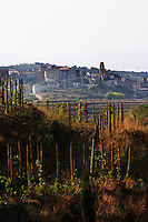 "Vines pruned on stakes, ""echalat"". View over Gratallops from winery. Mas Igneus, Gratallops, Priorato, Catalonia, Spain."