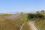 Boardwalk at Sweet Springs Nature Preserve in Los Osos, California looks over Morro Bay toward power plant smoke stacks and distinctive Morro Rock.