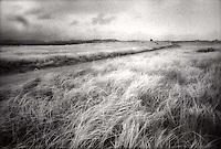 Dune grasses<br />