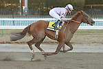 03 06 2010: Favorite Awesome Act & Julien Leparoux win the Grade III  Gotham, for 3 year olds at 1 1/6 mile, at Aqueduct Racetrack, Jamaica, NY.  Trained by Jeremy Noseda.  Owned by Susan Roy & Vinery Stable.