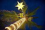 Palm Tree with Lights at Night