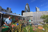 In the City, with, in the background, 30 St Mary Axe, the skyscraper designed by Norman Foster and Partners for Swiss Re, the urban beekeeper Brian Mc Callum is inspecting a hive on the roof of Sir John Cass Primary School. He and his sidekick John, the school's gardener, take care of a hive in the hanging garden of this kindergarten and primary school. Brian is a pro-bee activist. As a beekeeper, he is trying to set up as many hives as possible in London. For this, Brian founded a company in 2006 called Urban Bees and he offers courses in beekeeping and classes for companies. Before he turned his passion into a business, Brian was a university geography professor. H worked in the world of advertising and was a sailing enthusiast who spent many nights holding onto yacht riggings on the Atlantic Ocean. He has a B.S. in geography and environmental studies from the University of Surrey. He lives in Battersea with his wife Alison and their bees. http://www.urbanbees.co.uk/