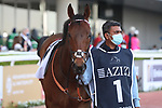 March 27, 2021: EQUILATERAL (GB) #1 in the post parade for the Al Quoz sprint on Dubai World Cup Day, Meydan Racecourse, Dubai, UAE. Shamela Hanley/Eclipse Sportswire/CSM