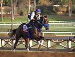 October 27, 2014: Private Zone works in preparation for the Breeders' Cup Sprint at Santa Anita Park in Arcadia, California on October 27, 2014. Zoe Metz/ESW/CSM