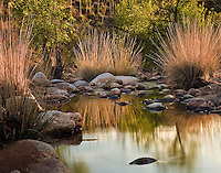 The Sonoran Desert & Southern Arizona