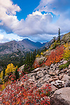 mountain ash and Longs Peak on an autumn evening in Rocky Mountain National Park, Colorado, USA