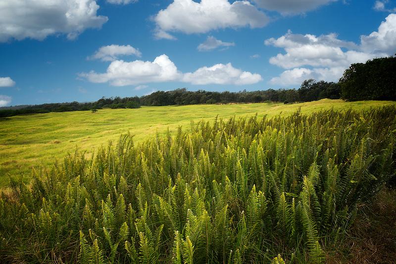 Ferns and grassland. Hawaii Volcanoes National Park, Hawaii Island