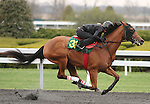 April 03, 2014: Hip 31 Divine Park - Sacre Coeur consigned by Eddie Woods worked 1/8 in 10:0.  Candice Chavez/ESW/CSM