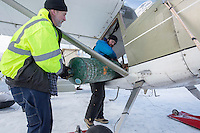 """Volunteer Iditarod Air Force pilot, Kevin """"OE"""" Robbins gets help loading a 100 lb. bottle of propane into his airplane for a trip to the Rainy Pass checkpoint at the Willow, Alaska airport during the Food Flyout on Saturday, February 20, 2016.  Iditarod 2016"""