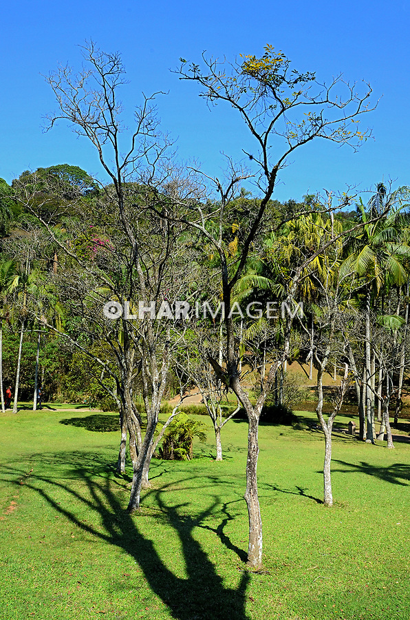 Árvore, Jardim Botânico, Sao Paulo. 2021. Foto Juca Martins
