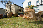 Phydeau, the Harman's dog at their home in Delabole, the UK.