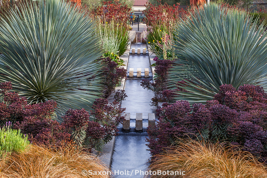 Los Angeles; Yucca rigida and Euphorbia 'Nothowlee' (Blackbird Spurge) - The Celebration Garden with water rill between matching double perennial borders; Huntington Botanic Garden