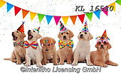 Interlitho-Alfredo, REALISTIC ANIMALS, REALISTISCHE TIERE, ANIMALES REALISTICOS, photos+++++,dogs, party,KL16580,#a#, EVERYDAY