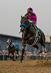 MAY 18: Anothertwistafate with Jose Ortiz up jumps the tram tracks as he races in the Preakness Stakes at Pimlico Racecourse in Baltimore, Maryland on May 18, 2019. Evers/Eclipse Sportswire/CSM