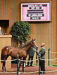 September 11, 2014: Hip #589 Medaglia d'oro - Dowry filly consigned by Royal Oak Farm, sold for $1,500,000 at the Keeneland September Yearling Sale.   Candice Chavez/ESW/CSM