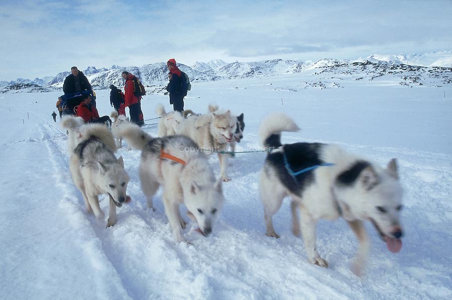 Traineau à chiens sur la banquise Groënland (côte Est). Région d'Angmagssalik (Ammasalik ou Tassilaq). Dog sleg on the ice field Greenland (East coast).