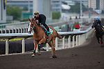 DEC 11,2015: Gold-Fun ,trained by Richard Gibson,exercises in preparation for the Hong Kong Sprint at Sha Tin in New Territories,Hong Kong. Kazushi Ishida/ESW/CSM