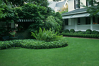 Soothing, beautiful lawn with white suburban house and porch, shade, groundcover, ferns, wrought iron patio set table and chairs, awning, foundation hedges clipped into circular shrub balls
