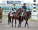 HALLANDALE BEACH, FL - JAN 13:One Go All Go #8 with Chris Landeros in the irons prepares to run the $200,000 Fort Lauderdale Stakes for trainer Charles L. Dickey at Gulfstream Park on January 13, 2018 in Hallandale Beach, Florida. (Photo by Bob Aaron/Eclipse Sportswire/Getty Images)