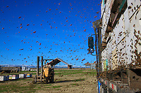 The unloading of the 1200 hives begins under a winter sun. Finally freed, millions of bees fly around in all directions for a cleansing flight.