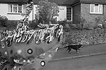 The Minehead Hobby Horse, Minehead, Somerset. 1971 May 1st