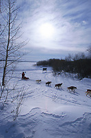 M Williams Mushes on Yukon Rvr to Grayling 99 Iditarod AK