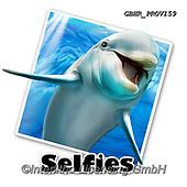 Howard, SELFIES, paintings+++++,GBHRPROV159,#Selfies#, EVERYDAY ,underwater,maritime,dolphins