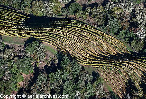 aerial photograph of mountain vineyard rows in autumn near Mt St. Helena, Mayacamas mountains, Sonoma county, California