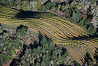 aerial photograph of mountain vineyard rows in autumn near Mt St. Helena, Mayacamas mountains, Sonoma county, California