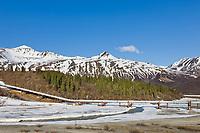 Trans Alaska pipeline crosses miller creek in the Alaska mountain range, Interior, Alaska.