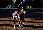 November 4, 2020: Abarta, trained by trainer Brad Cox, exercises in preparation for the Breeders' Cup Juvenile Turf at Keeneland Racetrack in Lexington, Kentucky on November 4, 2020. Jon Durr/Eclipse Sportswire/Breeders Cup