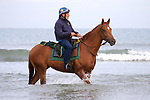 August 14, 2021, Deauville (France) - Horses training at the beach in Deauville. [Copyright (c) Sandra Scherning/Eclipse Sportswire)]