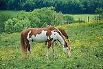 Horses in field...........................................