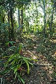 Aldeia Baú, Para State, Brazil. Path through forest with flowering bromeliads.