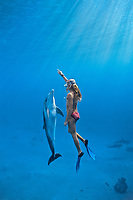 woman snorkeler, Dolphin trainer interacting with Bottlenose Dolphin ( Tursiops truncatus ), Dolphin Reef, Eilat, Israel - Red Sea.