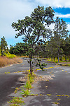 Tree Growing Out Of Paved Unused Road