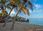 Virgin Gorda, British Virgin Islands, Caribbean <br /> Palm trees lean out towards the beach on Spring Bay, Spring Bay National Park