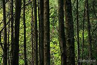 Image Ref: T049<br /> Location: RJ Hamer Arboretum<br /> Date: 13th April 2014
