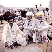 Raika men sit with their camels at the Pushkar Camel Fair. Every year thousands of traders, breeders, herders and camels arrive in this town to trade, buy and sell camels. The Raika are an ancestral caste of camel breeders in Rajasthan. Due to the increased cost of feeding and shelter, more and more Raika are being forced to sell off their camels, often for camel meat, which was once considered taboo.