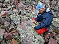Kinder entdecken Landkartenflechten auf Felsen, Gewöhnliche Landkartenflechte, Landkarten-Flechte, Krustenflechte auf Gestein, Rhizocarpon geographicum, map lichen