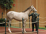 September 09, 2014: Hip #249 Tapit - Silver Colors filly consigned by Gainesway sold for $700,000 to Whisper Hill Farm (Mandy Pope) at the Keeneland September Yearling Sale.   Candice Chavez/ESW/CSM