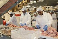 """- chickens breeding of """" Amadori """" group in Cesena, butchery unit ....- allevamento di polli del gruppo """"Amadori"""" a Cesena, reparto macellazione"""