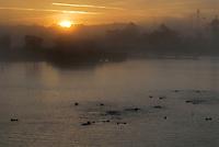 Sea Otter (Enhydra lutris) raft at sunrise near Moss Landing, CA.