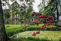 Wales, Valle Crucis Abbey, established 1201, near Llangollen.  Hawthorn tree blossoms in foreground.    Denbighshire.