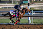 OCT 29 2014:Anodin, trained by Freddie Head, exercises in preparation for the Breeders' Cup Mile at Santa Anita Race Course in Arcadia, California on October 29, 2014. Kazushi Ishida/ESW/CSM