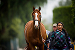 ARCADIA, CA - APRIL 01: Justify cools out at the barns after galloping in preparation for the Santa Anita Derby at Santa Anita Park on April 01, 2018 in Arcadia, California. (Photo by Alex Evers/Eclipse Sportswire/Getty Images)