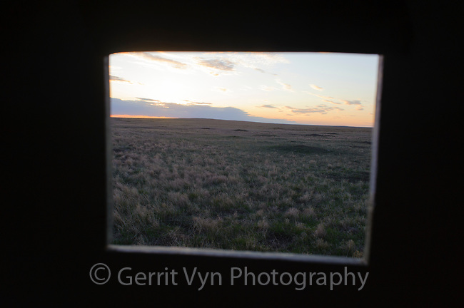 View from a public prairie-chicken viewing blind. Opportunities to observe the spectacular mating displays of prairie and sage grouse are avaialble at public viewing blinds in many western states. Ft. Pierre National Grassland, South Dakota. April.