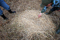 Scientists look at the nest of a Red-Crowned Crane, a threatened species at the Zhalong Wetlands, Heilongjiang Province. China. 2011